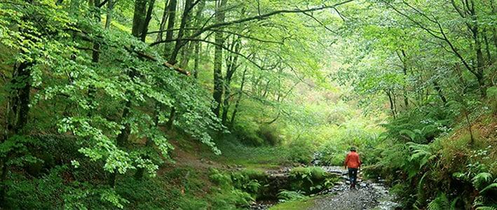 Trecking por bosque Etxaburu